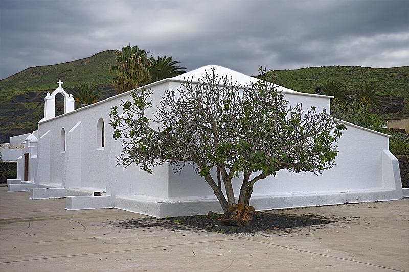 Higuera_tras_la_iglesia
