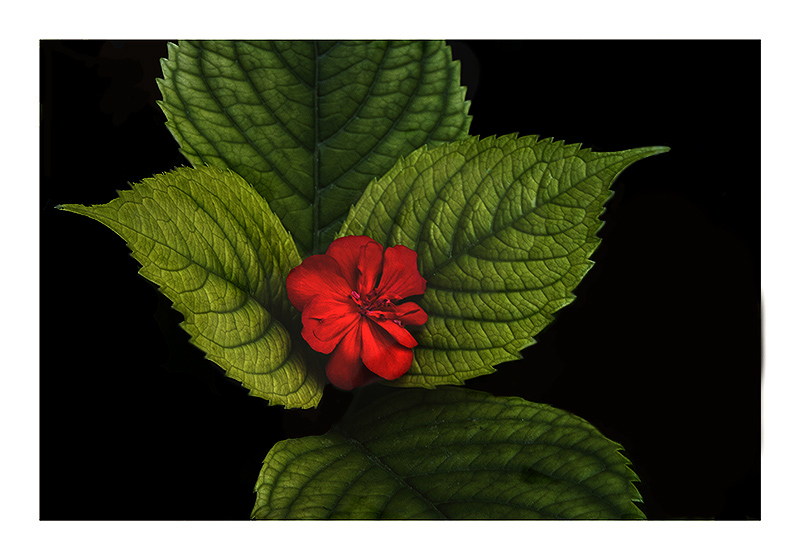 Rojo-y-verde3