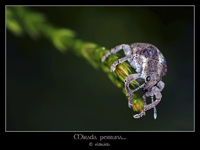 01_gorgojo_web