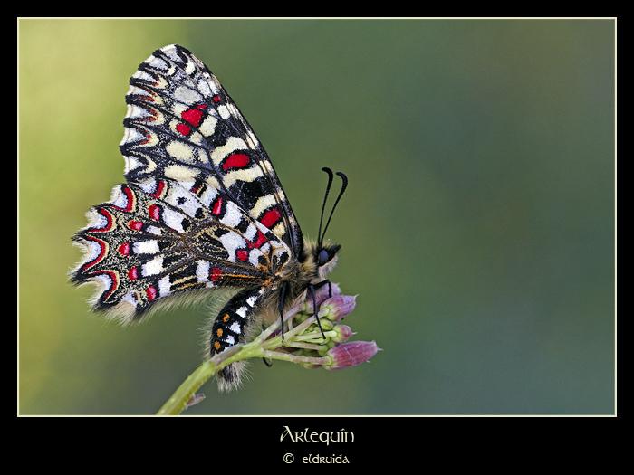 MG_6096_web