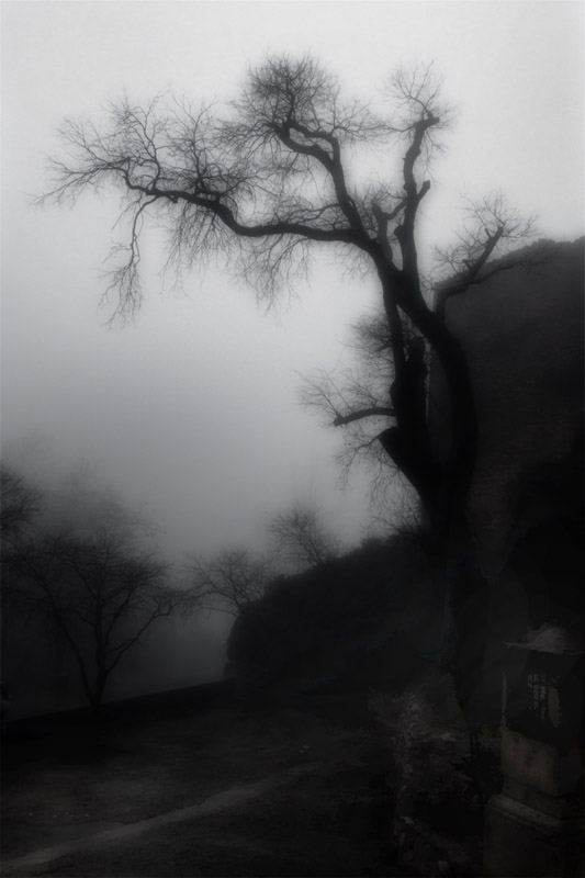 nieblas_en_la_oscuridad