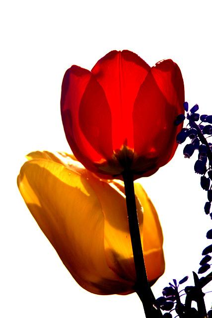 Flor00026_RT8