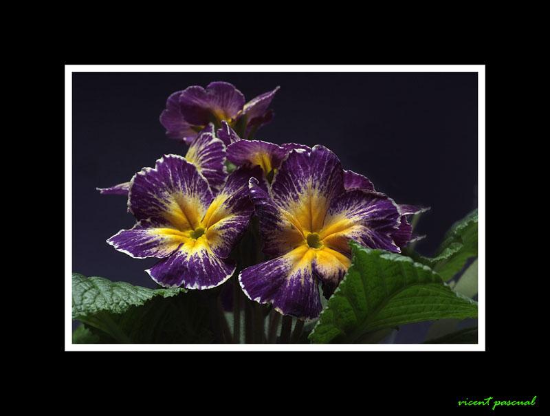 flors123