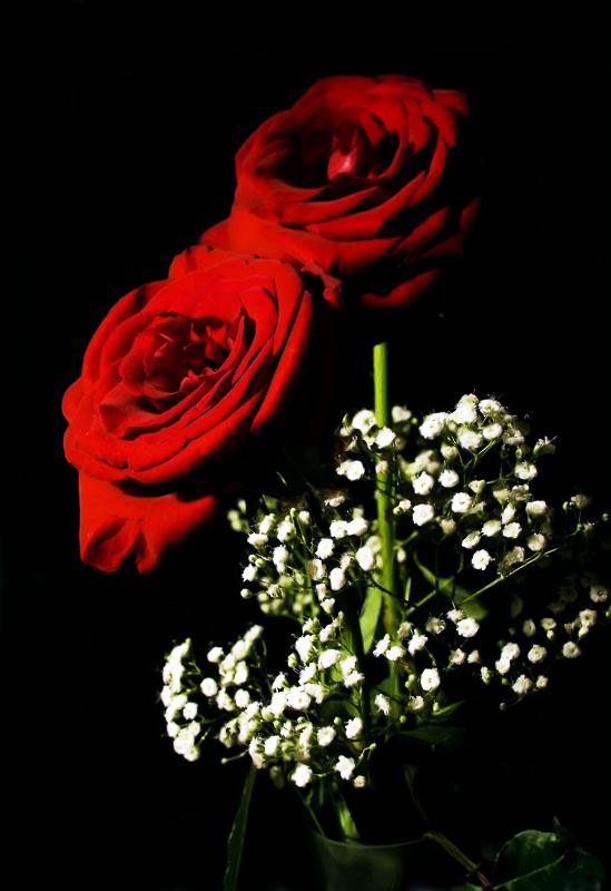 rosas_sobre_negro